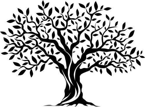 olivenbaum-illustration